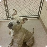 Adopt A Pet :: 2-2 Ting Ting - Triadelphia, WV