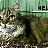 Adopt A Pet :: Nell - Medway, MA