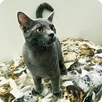 Adopt A Pet :: Augustus Gloop - Austin, TX