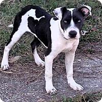 Adopt A Pet :: Trevor - New Orleans, LA