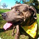 Adopt A Pet :: Grabold
