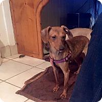 Adopt A Pet :: Twiggy - Marcellus, MI