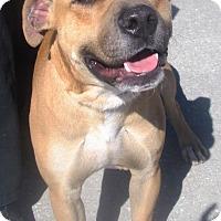 Adopt A Pet :: Dro - Darien, GA