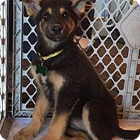 Adopt A Pet :: Nala - Starkville, MS