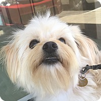 Adopt A Pet :: Mia - San Marcos, CA