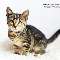 Adopt A Pet :: Buttons - Xenia, OH