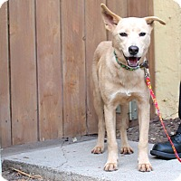 Adopt A Pet :: Suky - from Costa Rica - Los Angeles, CA