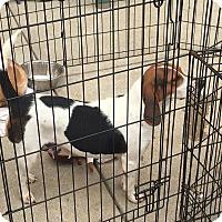 Adopt A Pet :: Sandy - Hohenwald, TN