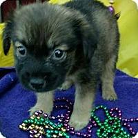 Adopt A Pet :: Rival - Des Moines, IA