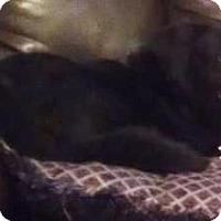 Adopt A Pet :: Nikita - Huntsville, AL