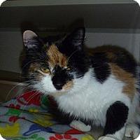 Adopt A Pet :: Eggnog - Hamburg, NY