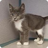 Adopt A Pet :: Vanilla Bean - Kinston, NC