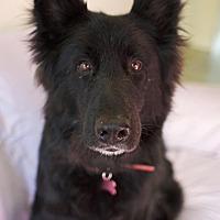 Adopt A Pet :: Nova - Canyon Country, CA