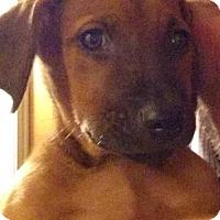 Adopt A Pet :: Klaus - Tonawanda, NY
