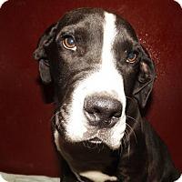 Adopt A Pet :: Dan - Oxford, MS