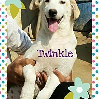 Adopt A Pet :: Twinkle- IN pup one blue eye! - Monroe, NJ