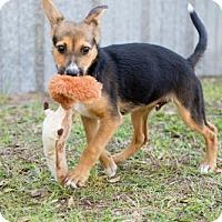 Adopt A Pet :: Tucker - Elkton, FL