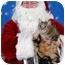 Photo 3 - Domestic Shorthair Cat for adoption in Howell, Michigan - Reggie