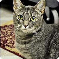 Adopt A Pet :: Gradie - Chesapeake, VA