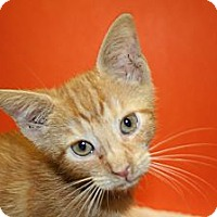 Adopt A Pet :: CESAR - SILVER SPRING, MD