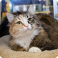 Adopt A Pet :: Cherry - Irvine, CA