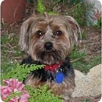 Adopt A Pet :: Digger - Gulfport, FL
