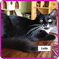 Adopt A Pet :: Leila - Miami, FL