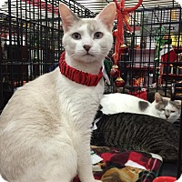 Adopt A Pet :: Purr Kins - Harrisburg, NC