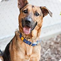 Adopt A Pet :: Leo - Visalia, CA