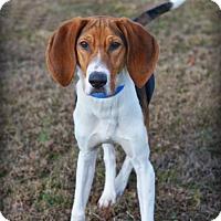 Adopt A Pet :: Beau - Dillsburg, PA