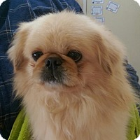 Adopt A Pet :: Lenny - ADOPTED!! - Antioch, IL