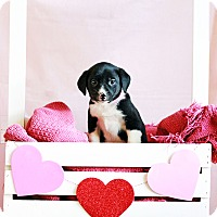 Adopt A Pet :: Sarah - Waldorf, MD