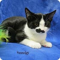 Adopt A Pet :: Smudgy - Taylor, MI
