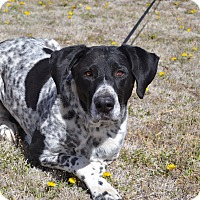 Adopt A Pet :: Harley - Larned, KS