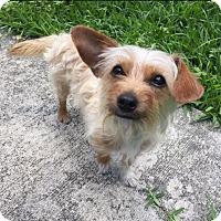 Adopt A Pet :: Bubbles - Homestead, FL