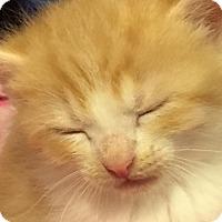 Adopt A Pet :: Rocky - Fayette City, PA