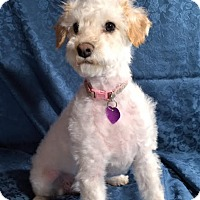 Adopt A Pet :: Ella - San Diego, CA