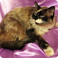 Adopt A Pet :: Cleo - St. Louis, MO