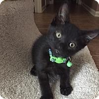 Adopt A Pet :: Dynamite - Hernando, MS