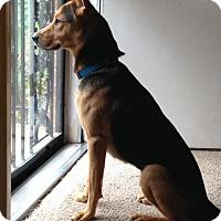 Adopt A Pet :: Brinkley - Portland, ME