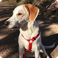 Adopt A Pet :: Martin (AKA Brody) - Colorado Springs, CO