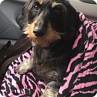 Adopt A Pet :: ELLA aka GIA - Portland, OR