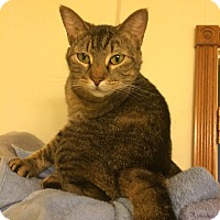 Adopt A Pet :: I'm so LOVE-able! - Pittsburg, KS