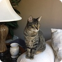 Adopt A Pet :: Tabitha - Richmond, VA