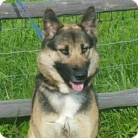 Adopt A Pet :: Jasmine - Vacaville, CA