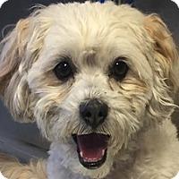 Adopt A Pet :: Ricky - Bloomington, IL
