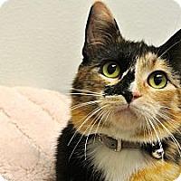 Adopt A Pet :: Tia - Foothill Ranch, CA