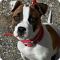 Adopt A Pet :: Libby - Indianapolis, IN