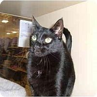 Adopt A Pet :: Sherlock - No.Charleston, SC