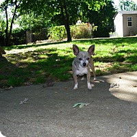 Adopt A Pet :: Frankie - South Amboy, NJ
